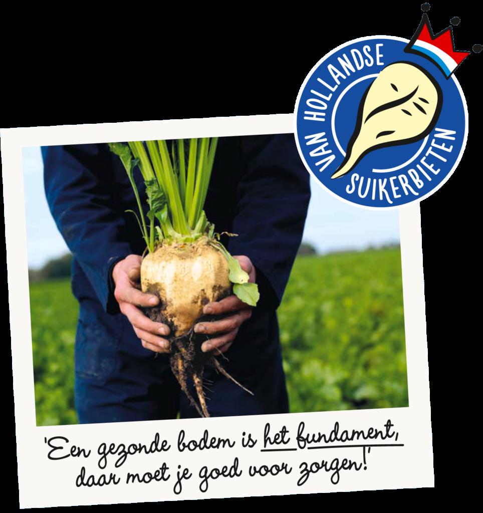 van Hollandse suikerbieten